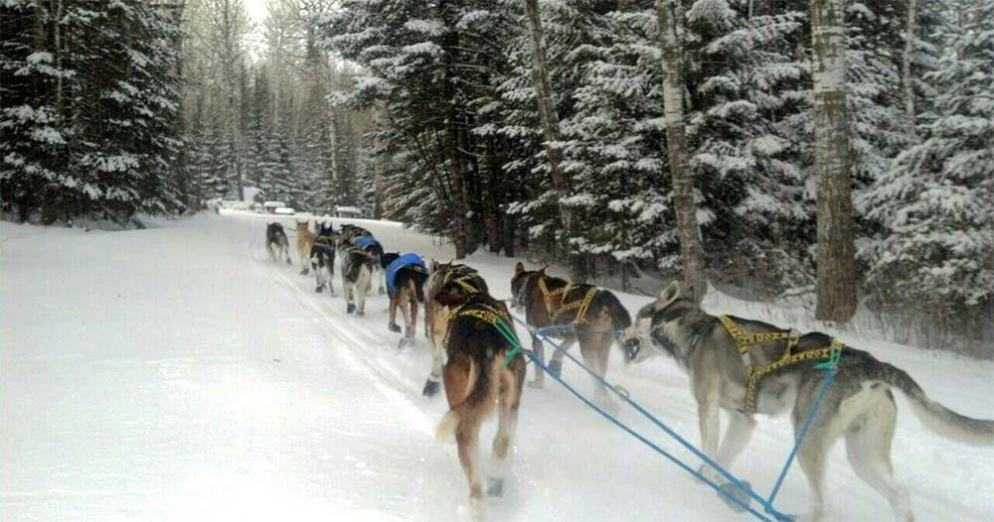 The Snomad Racing Team training with a sprint race from Grand Portage to the Gunflint Trail and back.