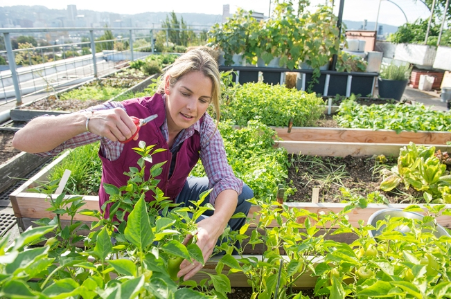Garden Clothes: Lightweight Gardening Vest & Armachillo Shirt