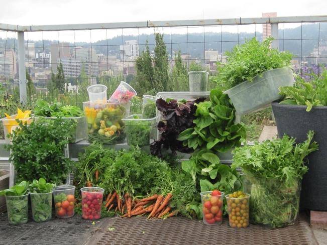 Urban Garden: Noble Rot's Rooftop Garden